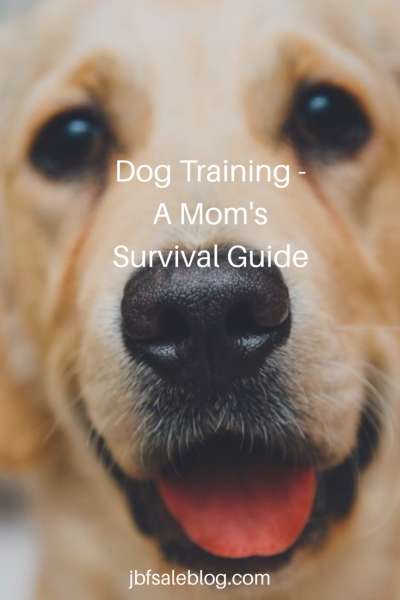 Dog Training: A Mom's Survival Guide